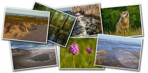 Download naturfotografier af Rune Engelbreth Larsen